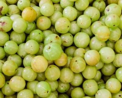 Fresh Amla (Indian Gooseberry) 500g